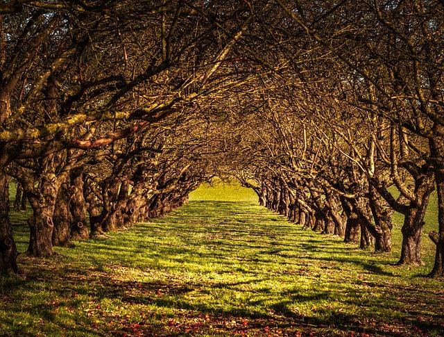 Avenue, Nature, Trees, Away, Tree Lined Avenue