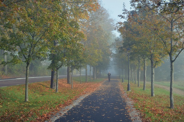 Pathway, Avenue, Solitary Figure, Perspective