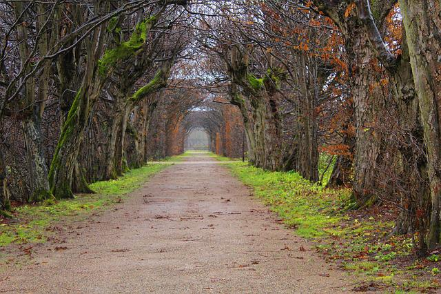 Avenue, Trees, Away, Park, Autumn, Nature