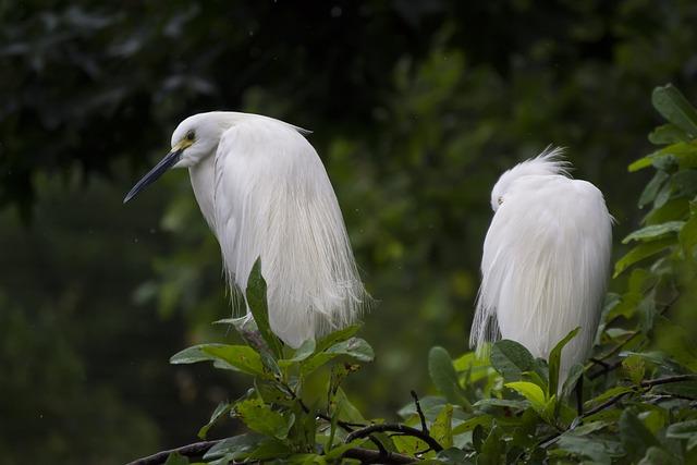 Animals, Avian, Beak, Birds, Feathers, Leaves, Nature