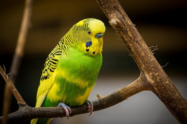 Animal, Avian, Bird, Color, Colorful, Colourful