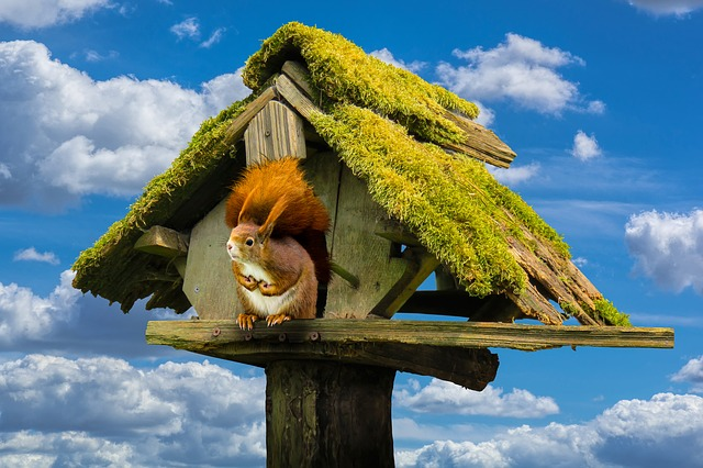 Nature, Sky, Aviary, Animals, Squirrel, Moss, Wood