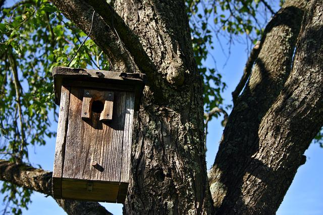 Nesting Box, Tree, Nature, Aviary, Nesting Place