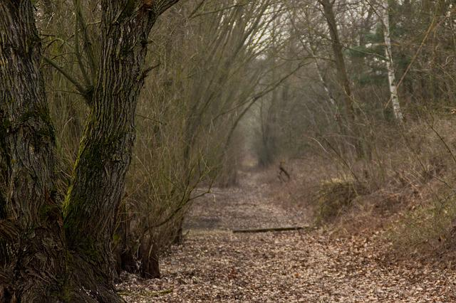 Forest, Away, Trees, Autumn, Hiking, Trail, Forest Path