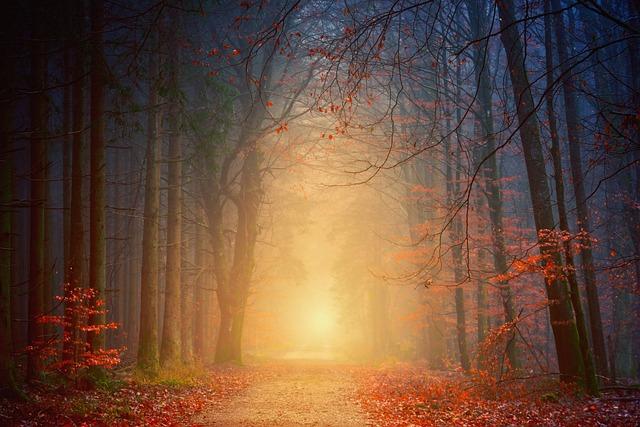 Away, Forest, Road, Autumn, Weird, Light, Mood, Trees