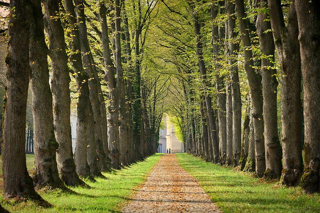 Avenue, Away, Chiemsee, Walk, Tree Lined Avenue, Nature