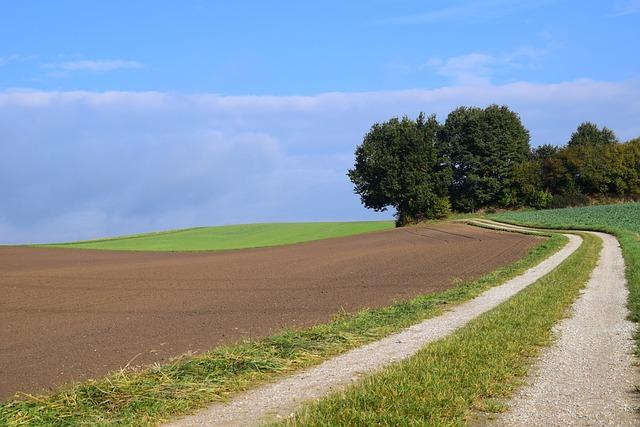 Landscape, Trees, Nature, Away, Fields, Corridors, Sky