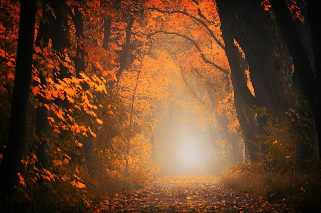 Light, Forest, Away, Path, Trees, Autumn, Red, Orange