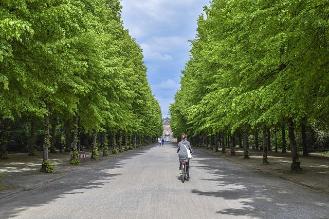 Avenue, Trees, Away, Nature, Landscape, Park, Green