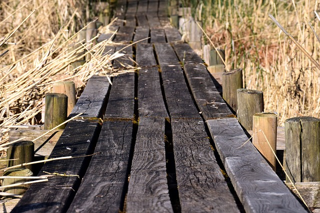 Web, Planks, Grass, Reed, Away, Dry, Walk, Weathered
