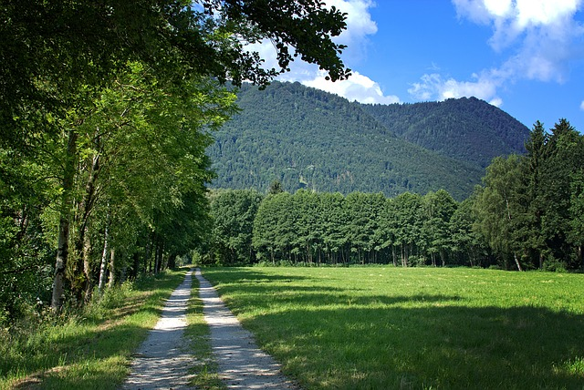 Away, Forest, Trees, Nature, Walk, Hiking, Vacations