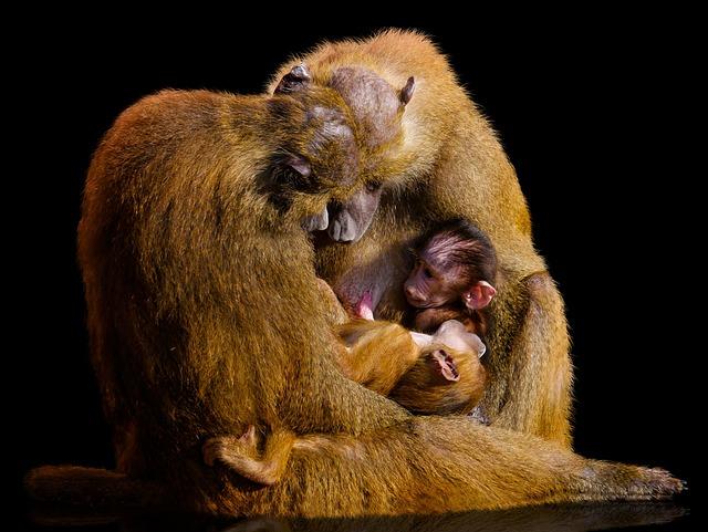 Animal World, Monkey, Mammal, Primate, Baboon