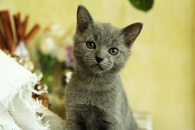 Cat, Baby Cats, Animal