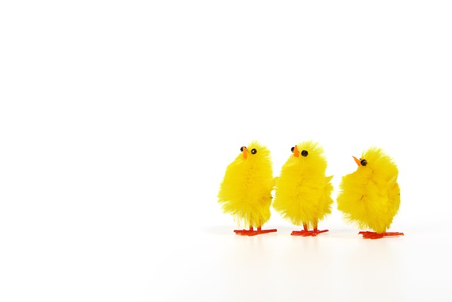 Adorable, Animal, Baby, Bird, Chick, Chicken, Cute