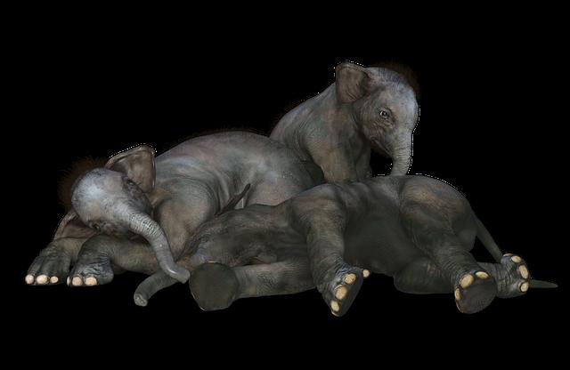 Elephant, Baby Elephant, African Bush Elephant, Animals