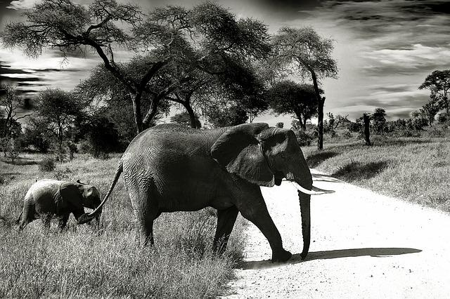 Elephant, Baby Elephant, Animal, Wilderness
