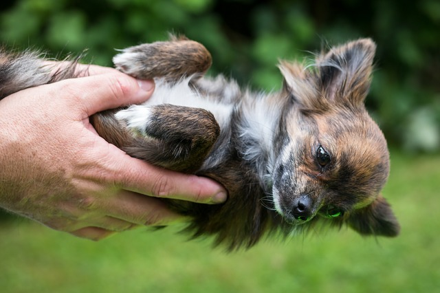 Chihuahua, Dog, Trust, Puppy, Baby, Face, Hand, Bear