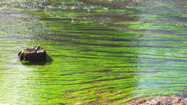 Water, Bach, Flow, Stream, Landscape