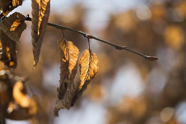 Autumn, Nature, Leaf, Faded, Back Light