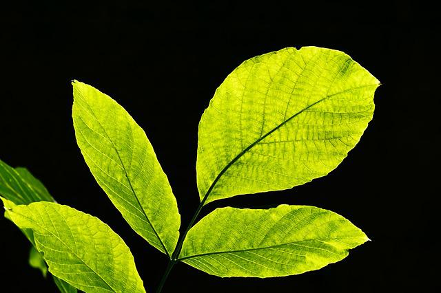 Leaves, Back Light, Nature, Leaf, Bright, Sun