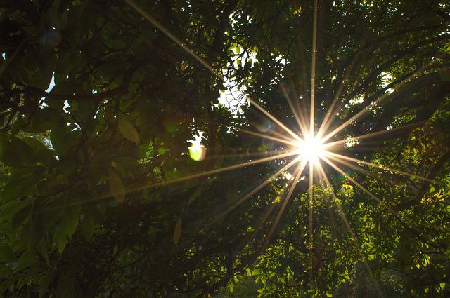 Back Light, Sun, Without Effects, Leaves, Crown