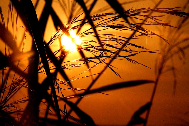 Grass, Grasses, Back Light, Sunrise, Sunset, Romance