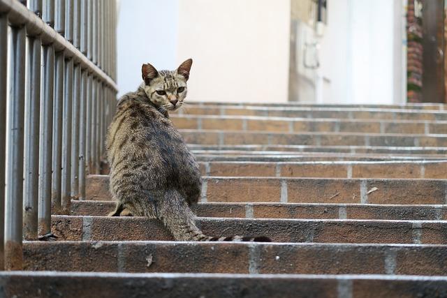Cat, Back, Rotor, Animal