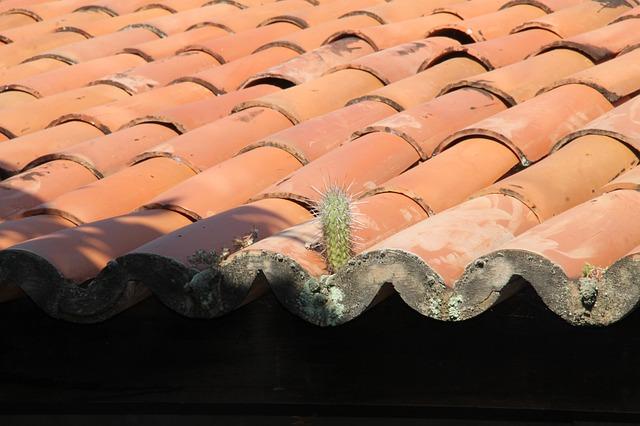 Cactus, Roof, Backcountry, Sergipe, Brazil, Mandacaru