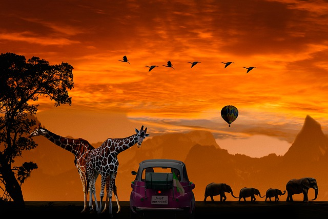Background, Emotions, Honeymoon, Vacations, Africa