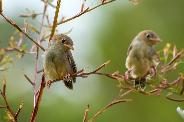 Singing, Birds, Sing, Nature, Song, Background, Animal