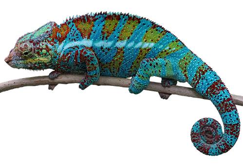 Reptile, Lizard, Animal, Isolated, Background