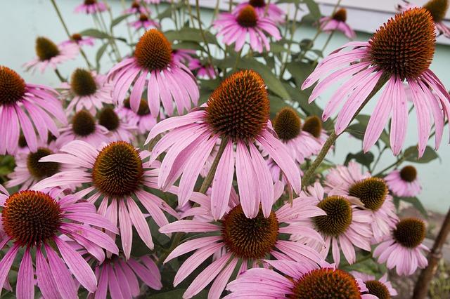 Nature, Petal, Pink, Floral, Bloom, Background, Garden