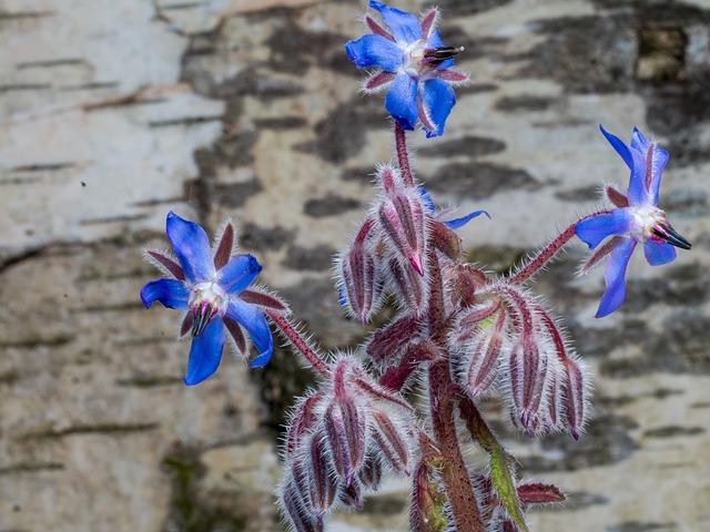 Flower, Spring, Background, Blue, Birch Bark