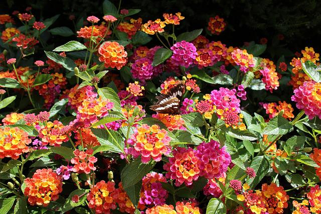 Flowers, Butterfly, Bright, Background
