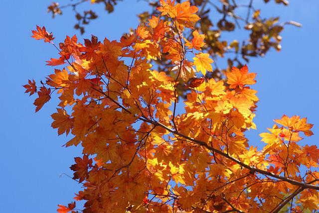 Agriculture, Autumn, Background, Bright, Closeup