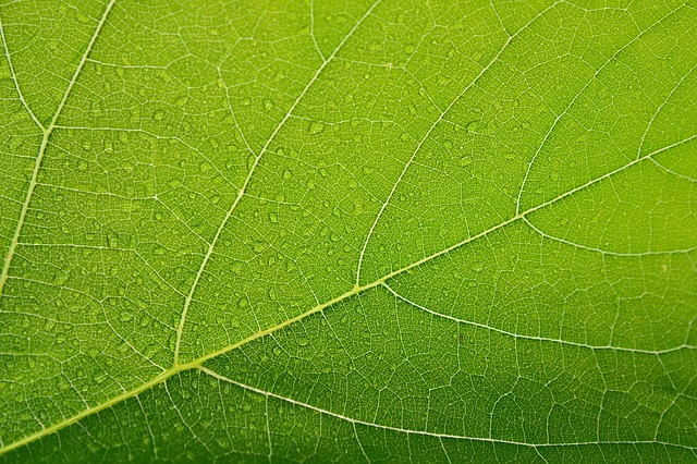 Leaf, Green, Closeup, Macro, Veins, Background, Nature