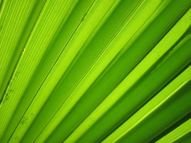 Background, Detail, Flora, Green, Leaf, Macro, Nature