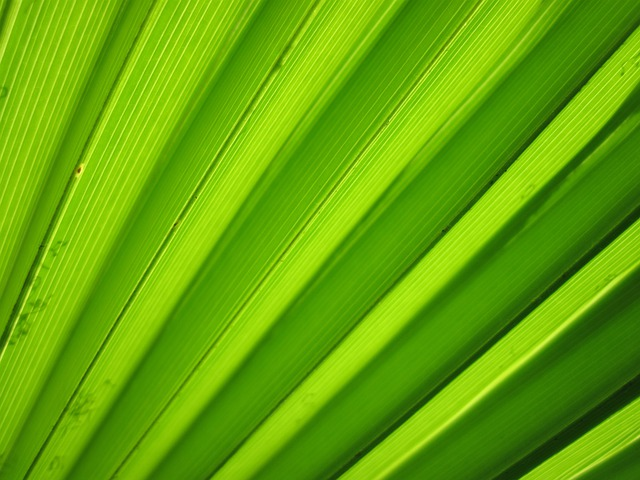 Background, Detail, Flora, Green, Leaf, Macro, Nature