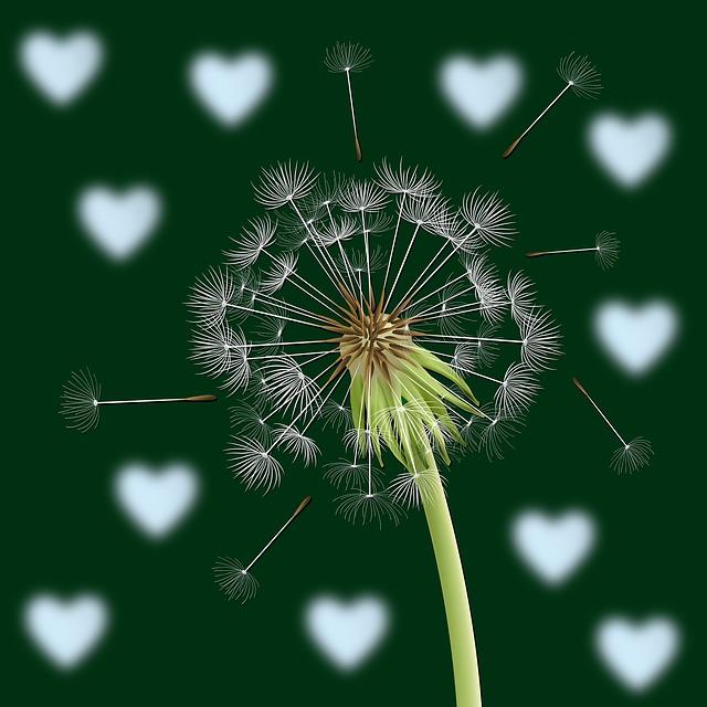 Dandelion, Flower, Flowers, Background, Hearts, Color