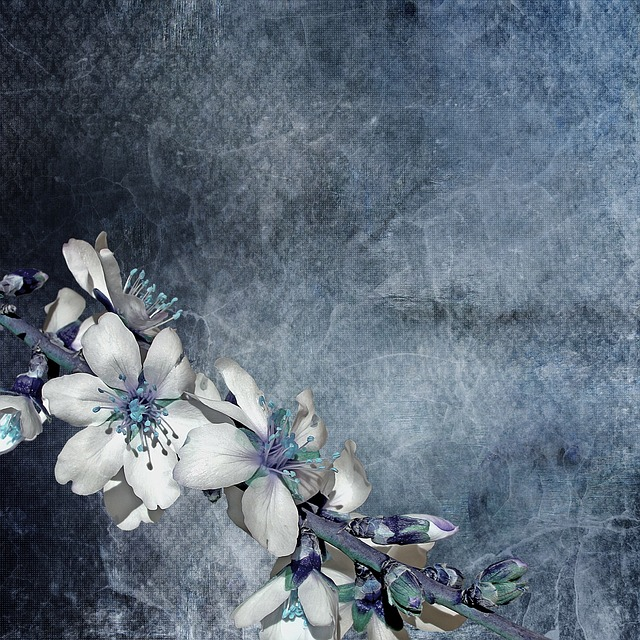 Texture, Background, Flowering Twig, Flowers