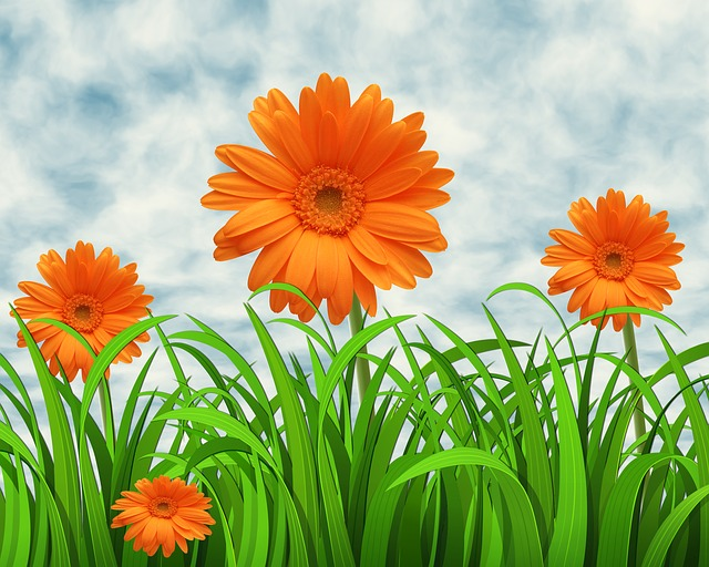 Flowers, Nature, Sky, Background, Margaritas, Grass
