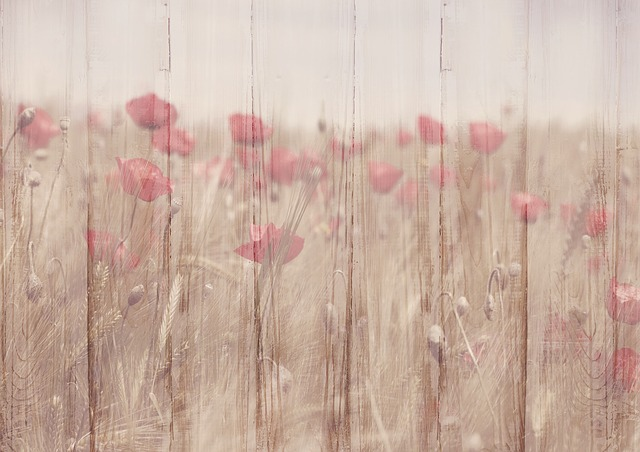 Background Image, Flowers, Klatschmohn, Wood, Structure