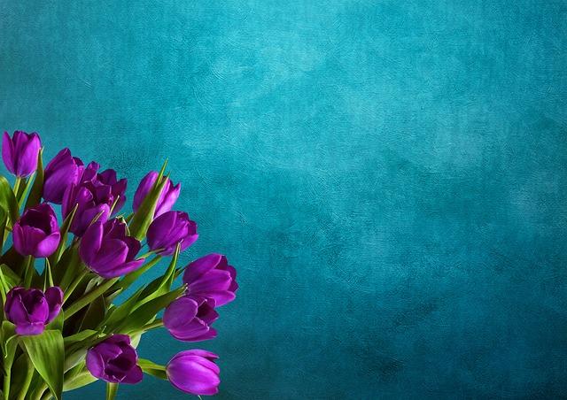 Tulips, Background Image, Bouquet, Purple, Postcard