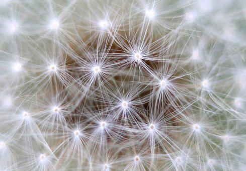 Dandelion, Background, Link, Neurons, Communication
