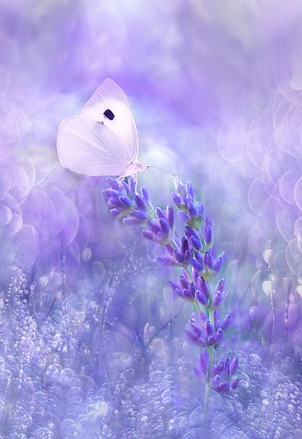 Nature, Flower, Summer, Color, Background, Butterfly