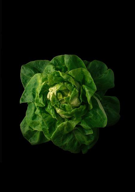Sheet, Plant, Background, Vegetable, Nature, Food