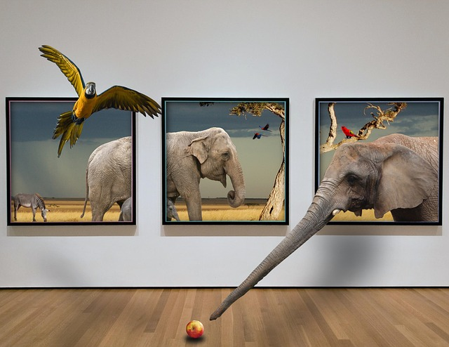 Picture Frame, Animal, Background, Nature, Safari