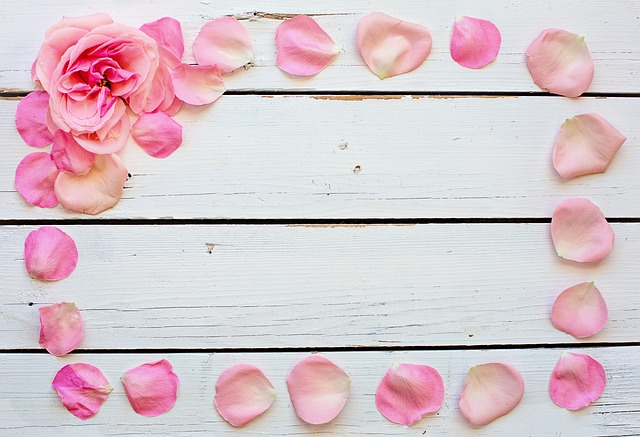 Flower, Rose, Petals, Pink, Text Space, Background