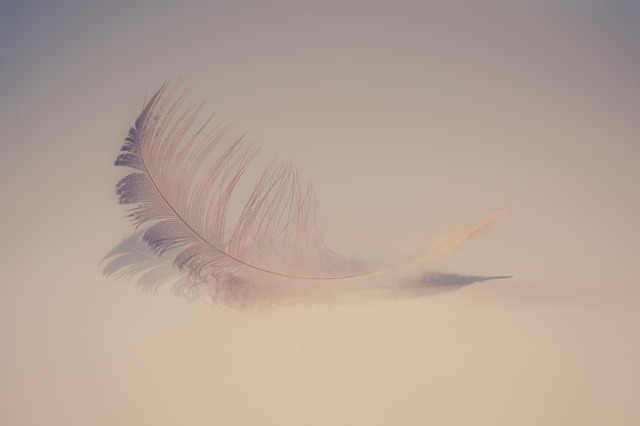 Feather, Soft, Sweet, Feathers, Background