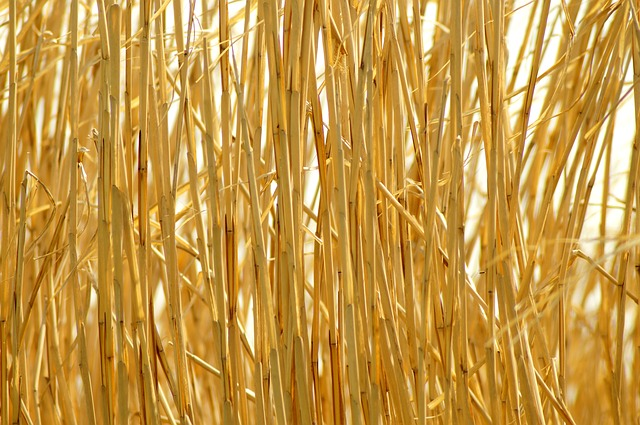 Background, Straw, Golden, Pattern, Nature, Dry, Field
